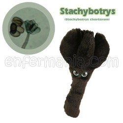 Mikrobio Erraldoi teddy - Stachybostrus Chartarum (moldea toxinak)