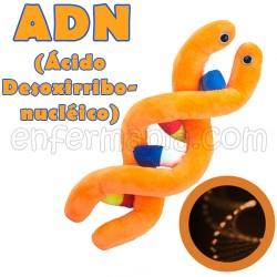Giantmicrobes - l'ADN