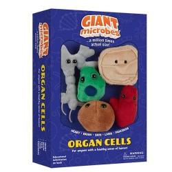 Caja mini-giantmicrobes células de órganos